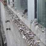 pest control services - damage to property caused by pigeons