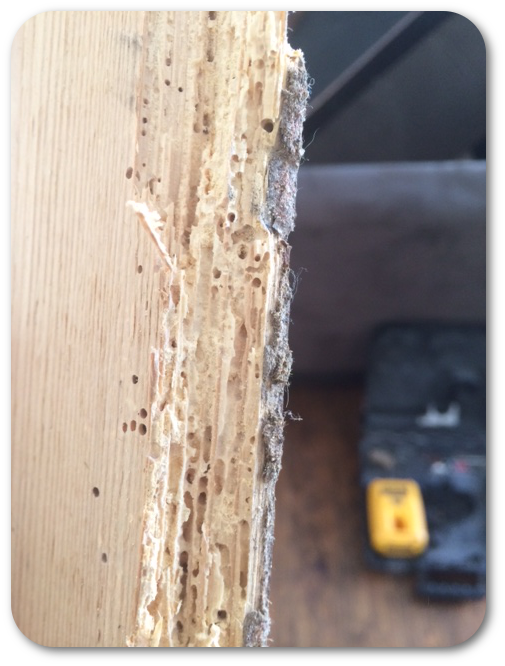 woodworm treatment Dublin