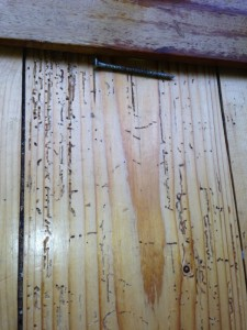 Woodworm Infestation