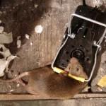 rat control - snap trap