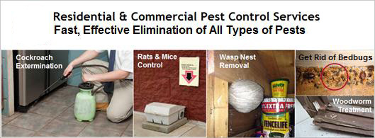 Pest Control Ireland | Residential & Commercial Pest Control